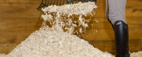 Now is the Time : Shavings