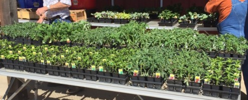 It's Garden Season at Buchanan's Hallsville Hardware