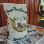 wheat seed semi close
