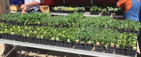 It's Garden Season at Buchanan's Hallsville Hardware
