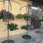 flowers hanging baskets hallsville