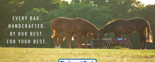 Now Available Bluebonnet Feeds!